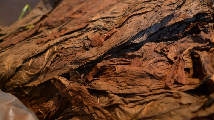Leaves waiting to be rolled into Camacho Corojo Cigars / Davidoff of Geneva, New York, NY / Leica D-Lux 4